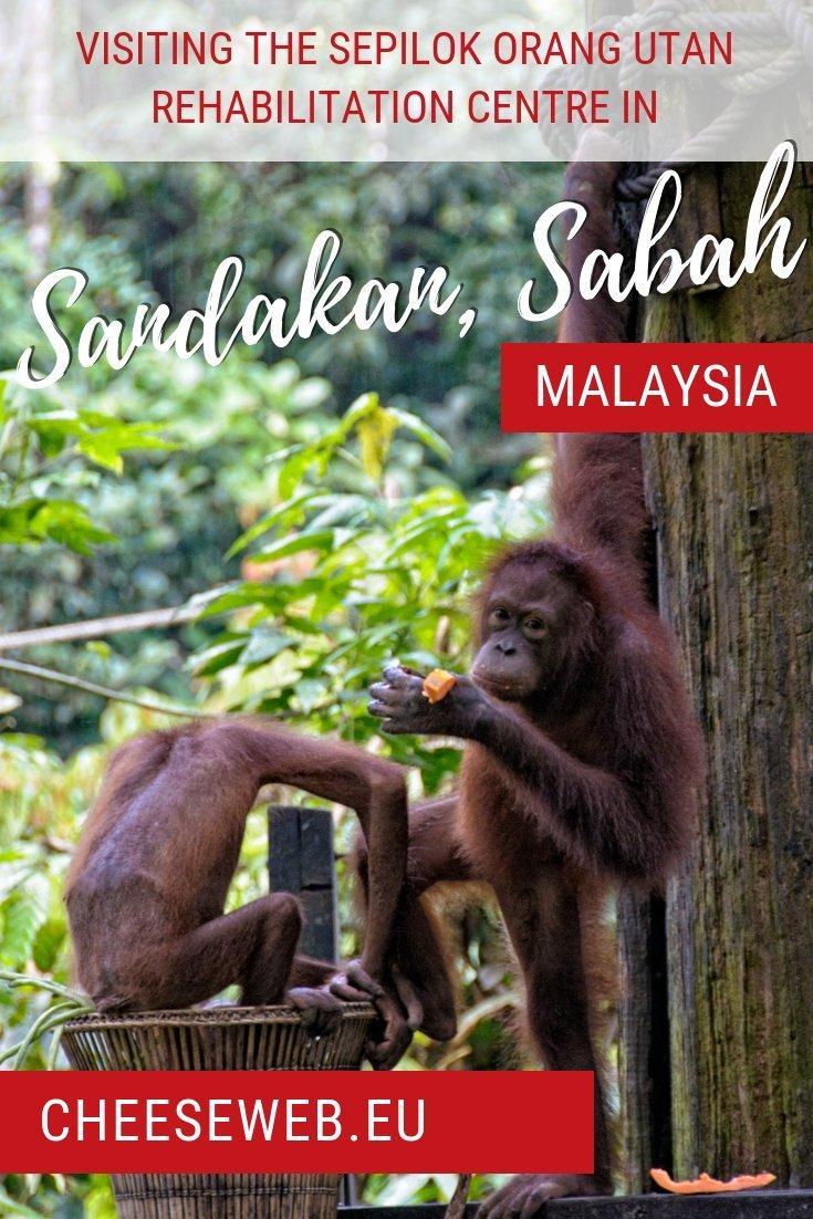 Visiting the Sepilok Orangutan Rehabilitation Centre, in Sandakan, Sabah, Malaysia