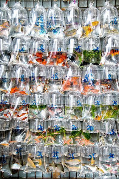 Fish of all shapes and colours at the Goldfish Market