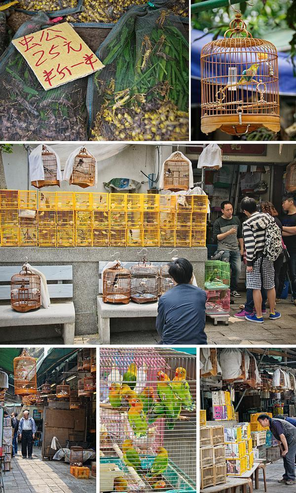 At the Bird Market