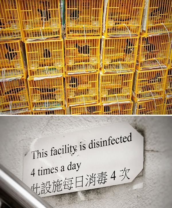We were happy about the disinfecting... not so happy about the tiny cages.