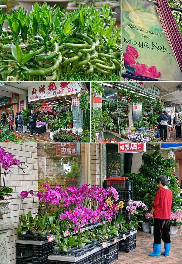 An impressive array of plant and flower shops