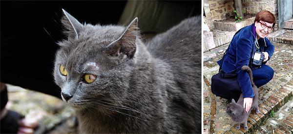 Friendly Kitties