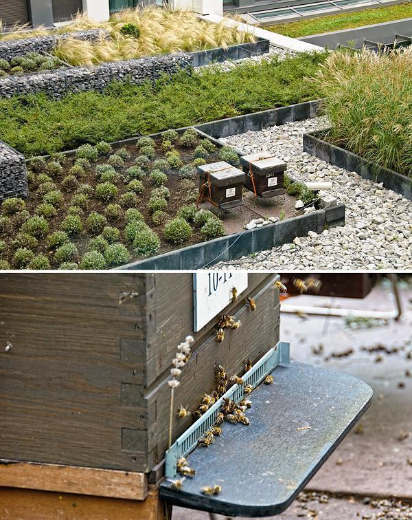 Bees Please!