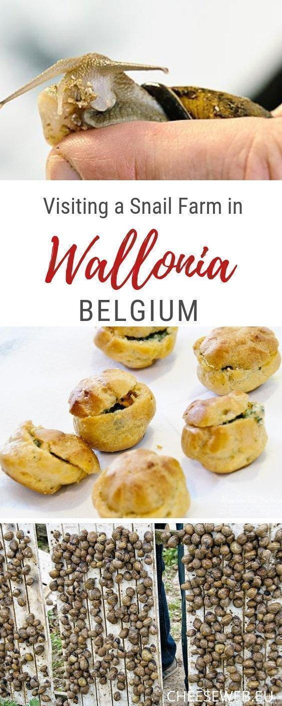 For a fun family day trip in Wallonia, Belgium, visit L'Escargotiere de Warnant, a snail farm producing one of the world's most sustainable foods.