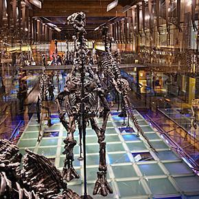Igaunodon's in the Dino-Cube