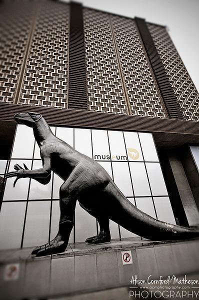 Visiting the 'dinosaur museum' in Brussels