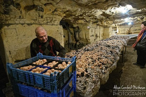 Cultivating mushrooms in the Grottes de Wonck