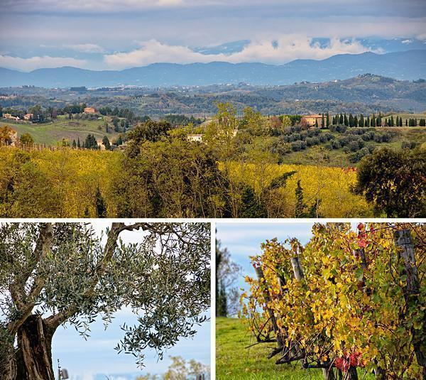 Olive oil, wine and beautiful views