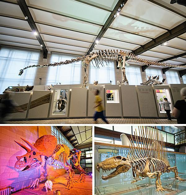 A few dino-favourites from the dinosaur hall