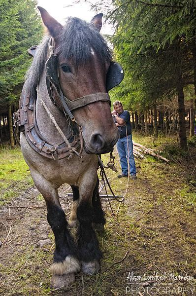 Horse and human work together in harmony