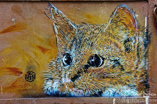 Cat graffiti in Tangier