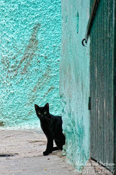 Kitten in Tetouan, Morocco