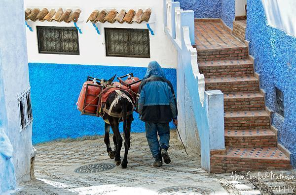 Donkey in Chefchaouen, Morocco