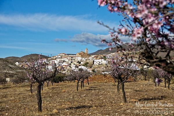 Andalusia Almond Blossoms