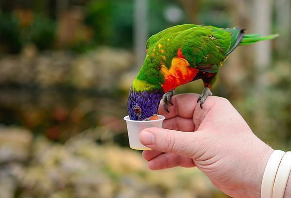 Feed a friendly parrot