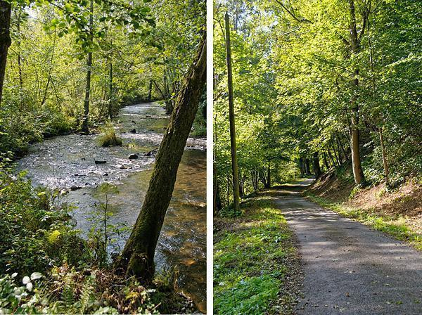 Scenes from our nature walk in the Ardennes