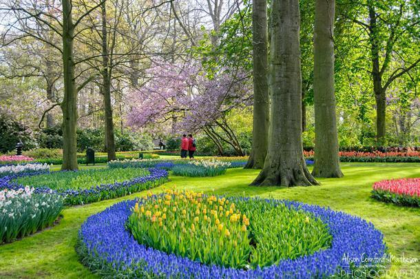 There is no point when all of the bulbs are in bloom at Keukenhof