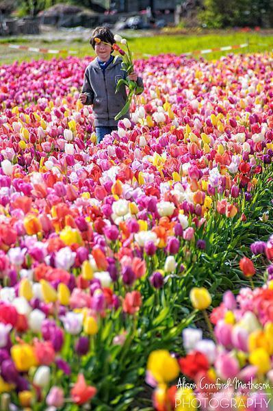 Annemieke's Pluktuin pick-your-own tulips