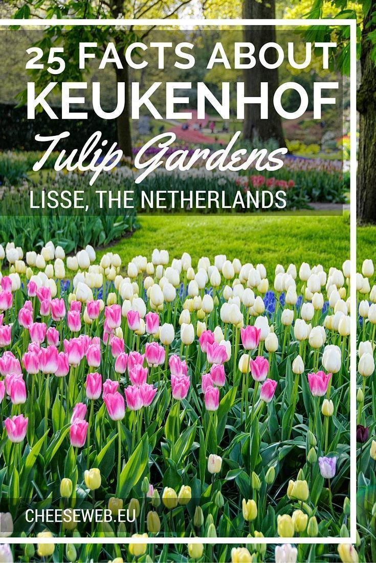 25 Facts about Keukenhof Gardens and Tulips, in Lisee, the Netherlands, 2014