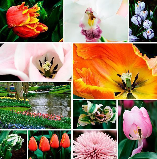 Keukenhof tulip Gardens in 2008
