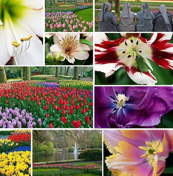 Keukenhof tulip Gardens in 2009