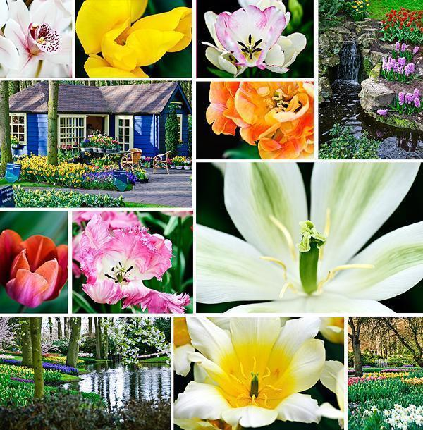 Keukenhof tulip Gardens in 2010