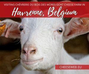 We taste delicious organic goat cheese from Belgian farm, Chèvrerie du Bois des Mûres, in Havrenne, near Rochefort, in the province of Namur.
