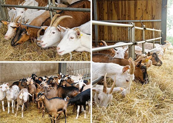Bois des mures goat cheese farm