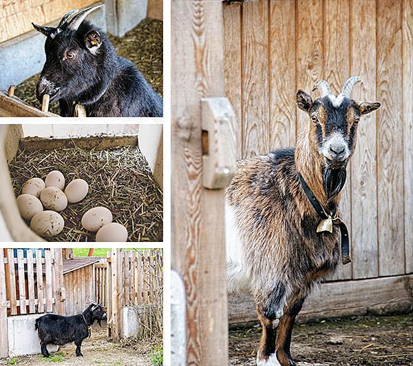 The farm yard crew