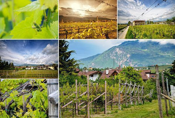 Wolfgang's vineyards