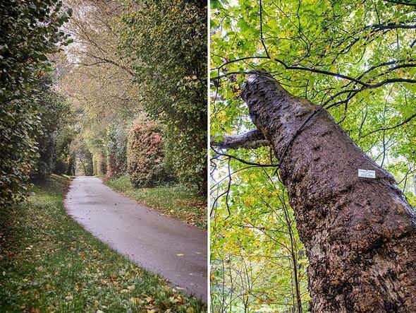 Take time for a stroll through Groenendaal's Arboretum