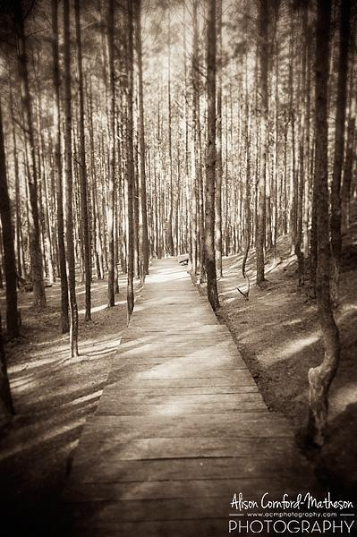 A mystical forest in Latvia, where anything could happen!