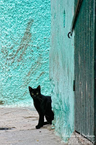 Black and Blue - This kitten peeks from behind a colourful wall