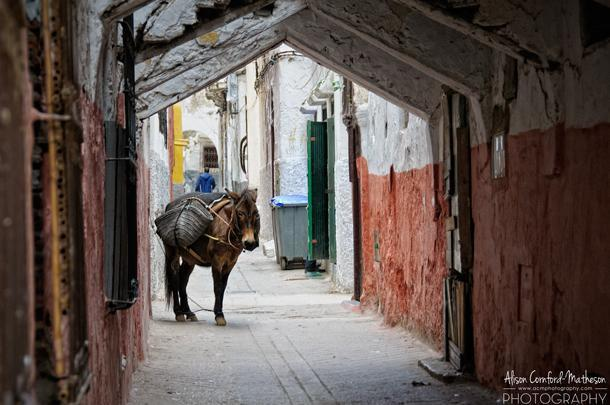 My favourite photo of the day - The donkey is still a main form of transportation through the narrow streets of the Medina