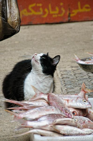We admired the patience of this kitty at the fish-seller's stall. Obviously he was well fed.