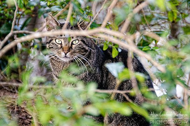Playing hide and seek with the feline residents of the island