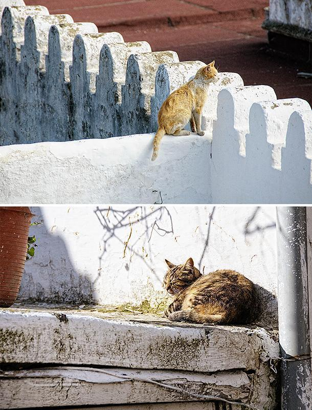 Cats enjoy the sunny roofs of the Tetouan Medina