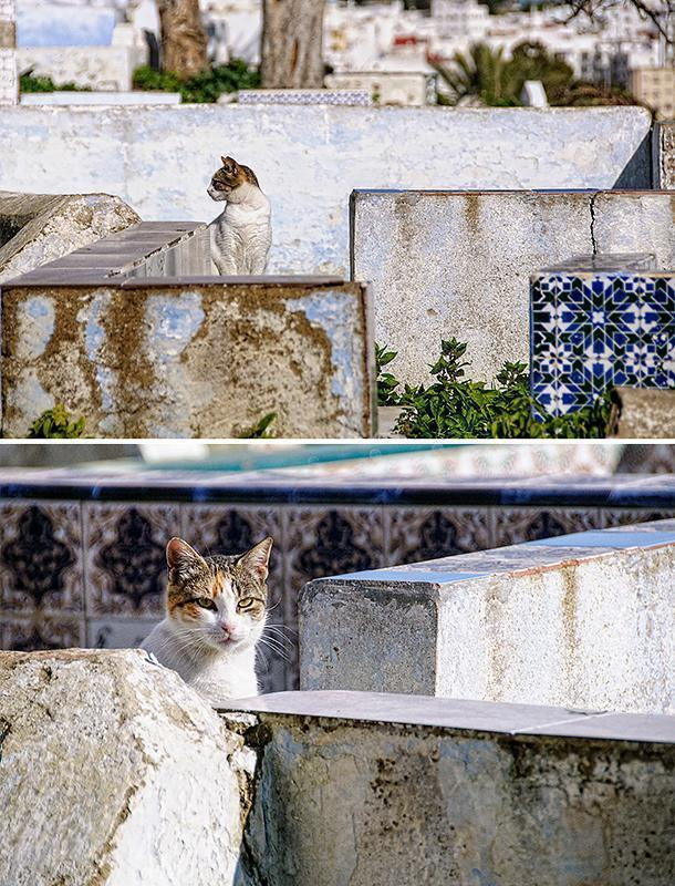 Cats enjoy the shade in the Tetouan Cemetery