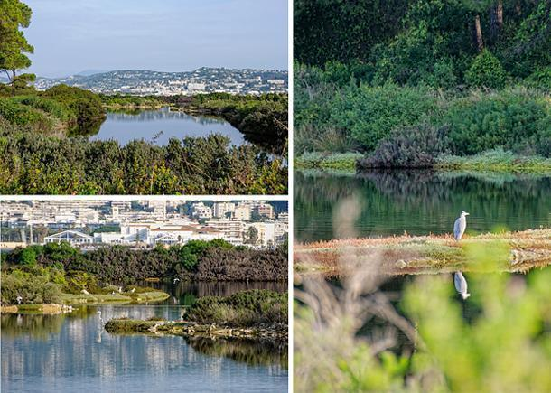 Cannes is in the distance but it feels miles from this quiet bird sanctuary