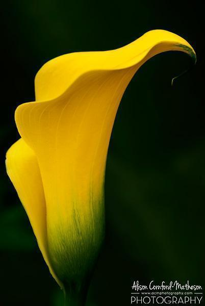 It's easy to get up close and personal with the flowers