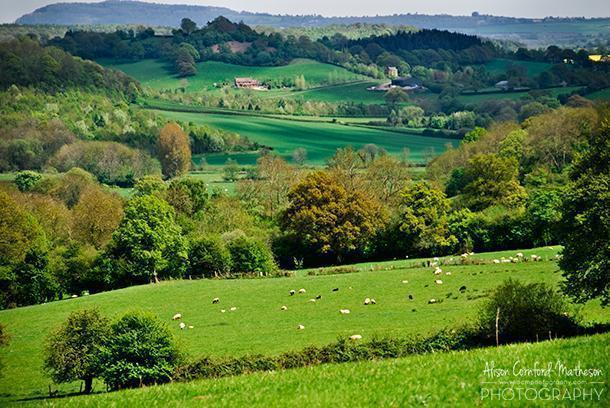 The rolling hills of Herefordshire, England.