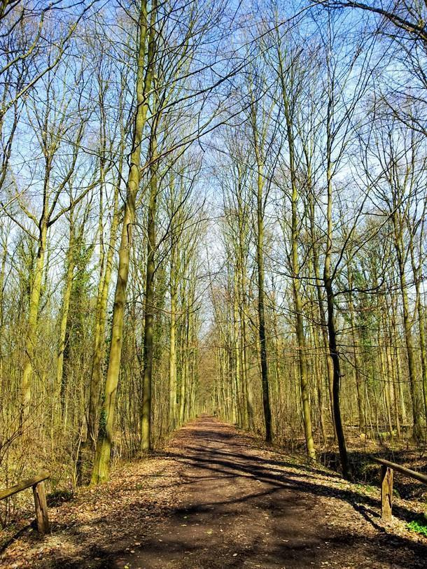Go for a walk in the woods