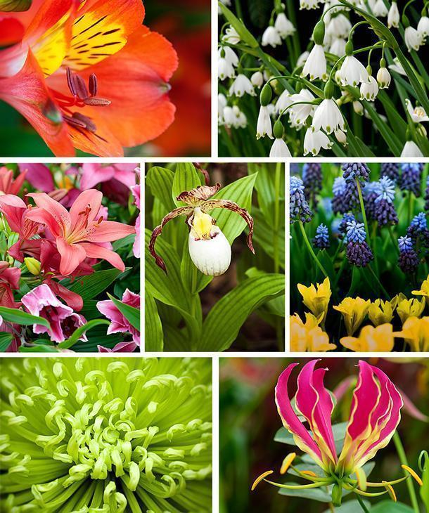 There are plenty of flower varieties to choose from at Floralia in Groot-Bijgaarden