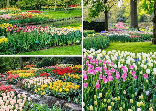 Keukenhof is the world's biggest spring tulip garden