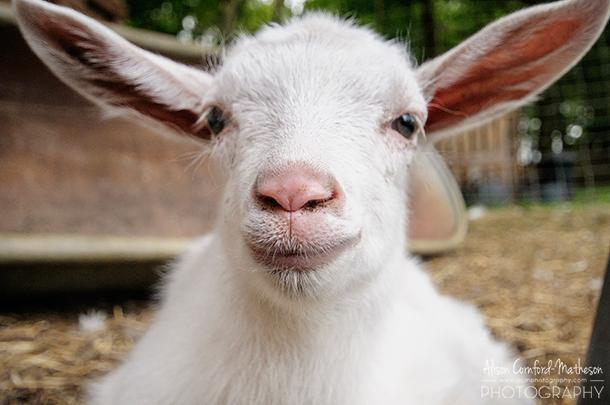 Any weekend that includes baby goats is a great one in my books!