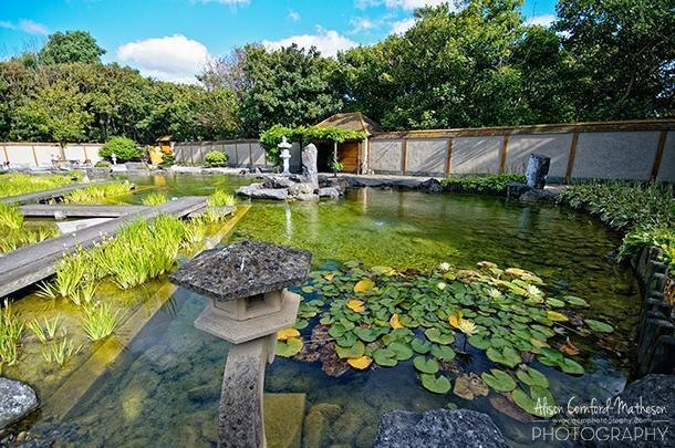 The Zen Garden is one of the hidden gems of Oostende