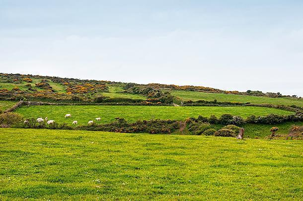 This corner of Manche certainly does look like 'Little Ireland'