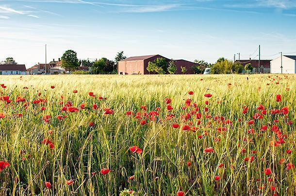Organic farming means your crops may have to share with 'weeds' but isn't it more beautiful?