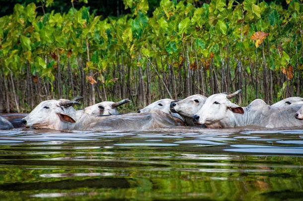 You never know what surprises are waiting around the bend in Guyane