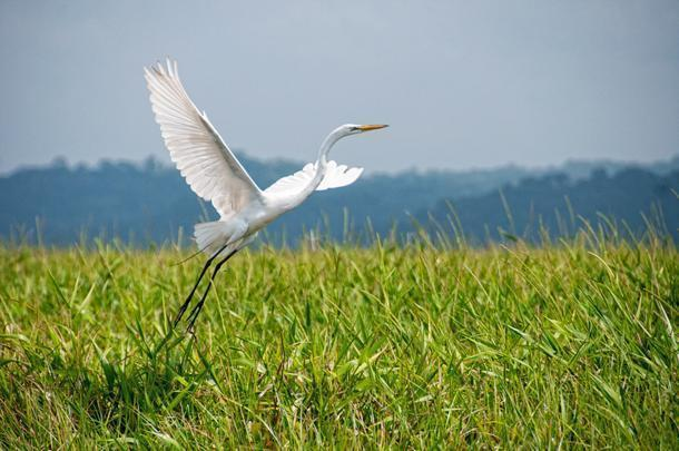 The Marais de Kaw is a refuge for countless species of birds